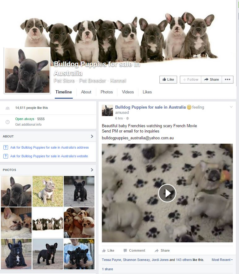 Bulldog Puppies for sale in Australia, scam Facebook page.jpg