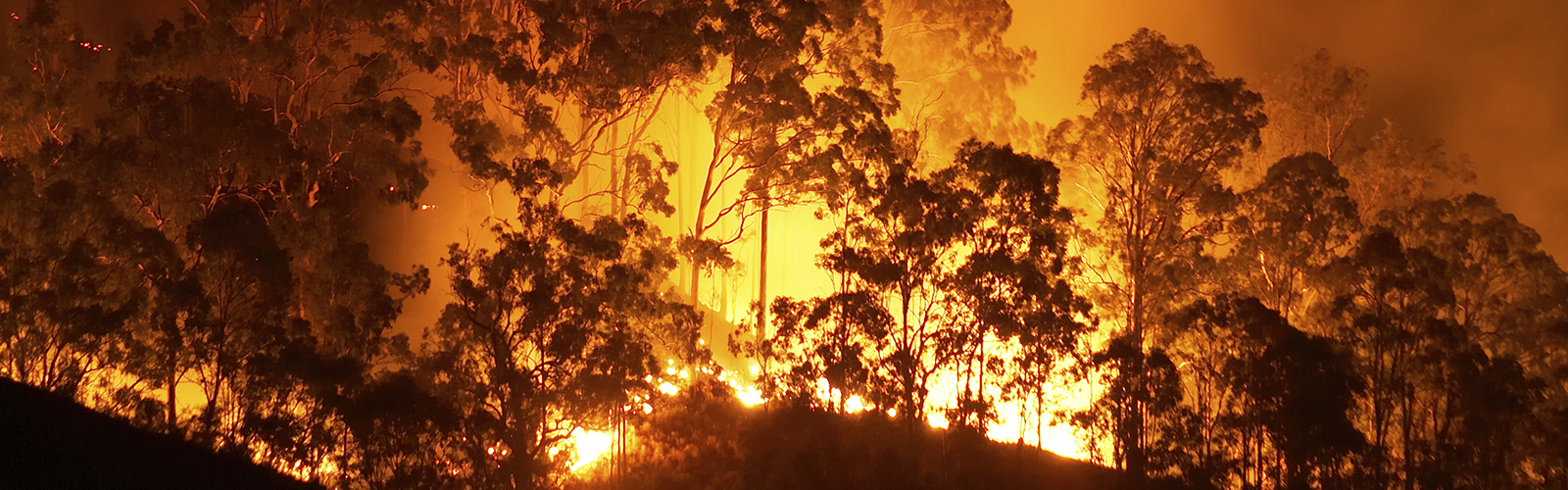 bc_bushfires_0 Online Form Builder Australia on