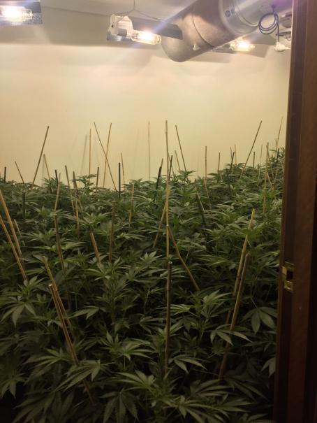 Cannabis grow house (supplied by WA Police)